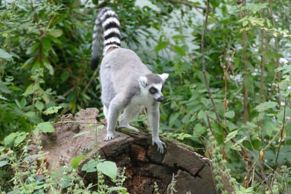Partir en expédition à Madagascar, une expérience unique à vivre